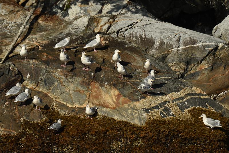 Gulls on rocks II