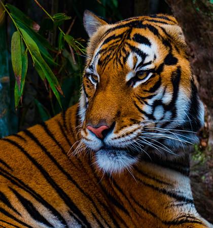 Audubon Zoo 12-2016
