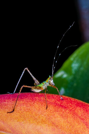 Porch Bugs