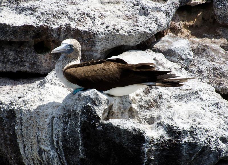 Galapagos-14-2.jpg