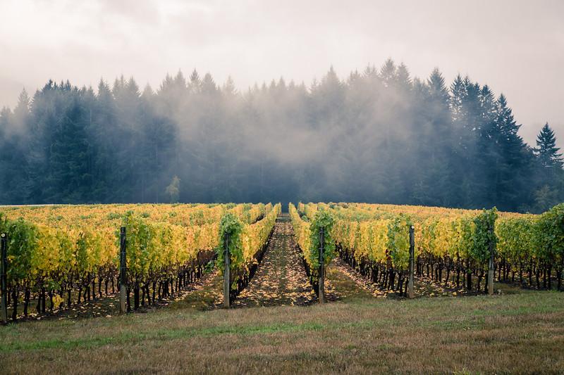 wineries-7491.jpg