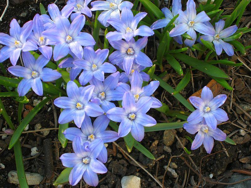 garden-2003-04-0117_std.jpg