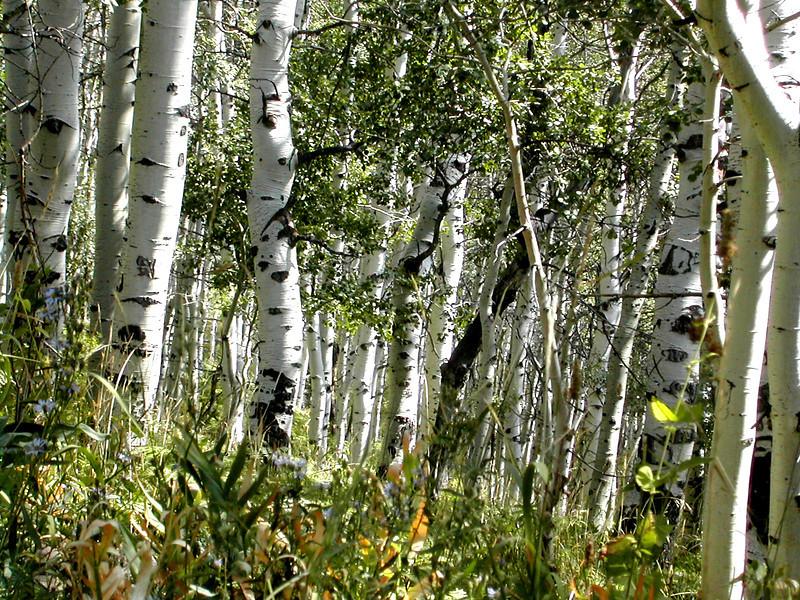 Utah forest.jpg