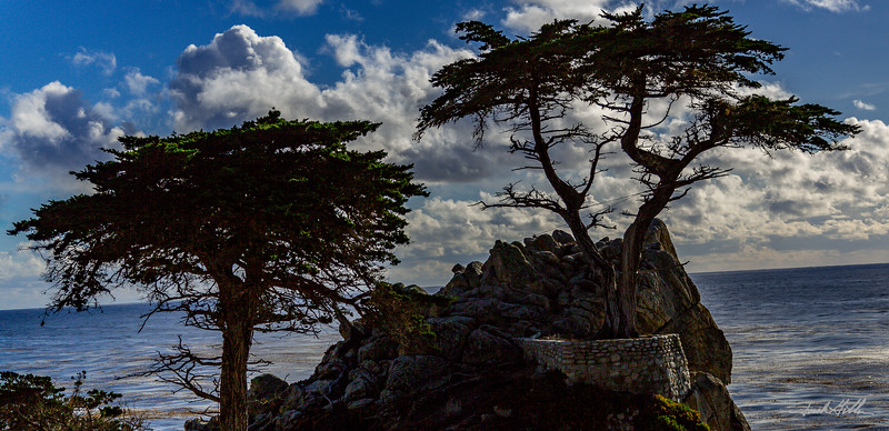Cypress Trees on scenic 17 mile drive
