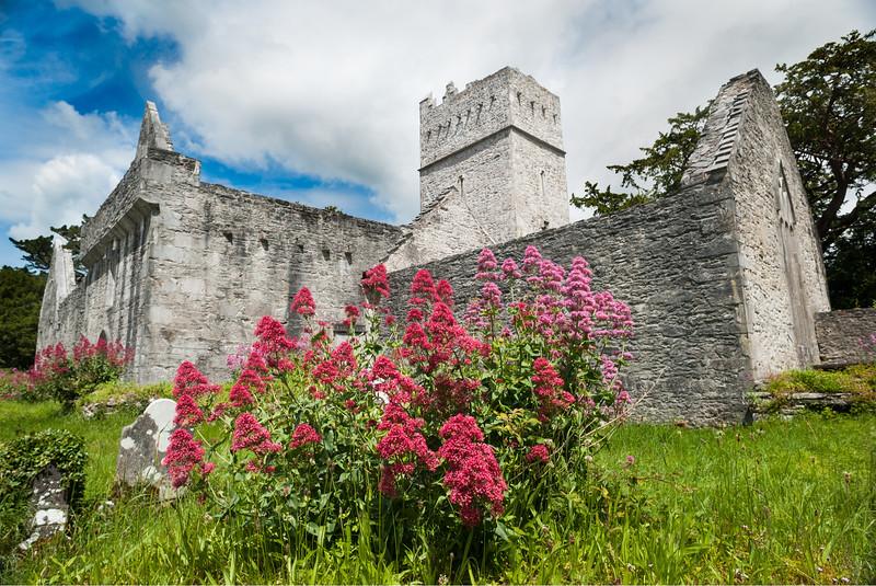 Muckross Abbey in Killarney