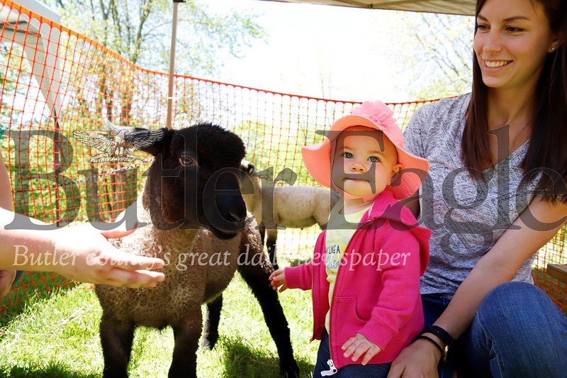Claire Logue greets a baby sheep with her mom Lauren Logue. Seb Foltz/Butler Eagle
