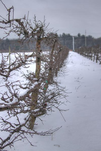 Easy Pickins Winter 010-1676783221-O.jpg