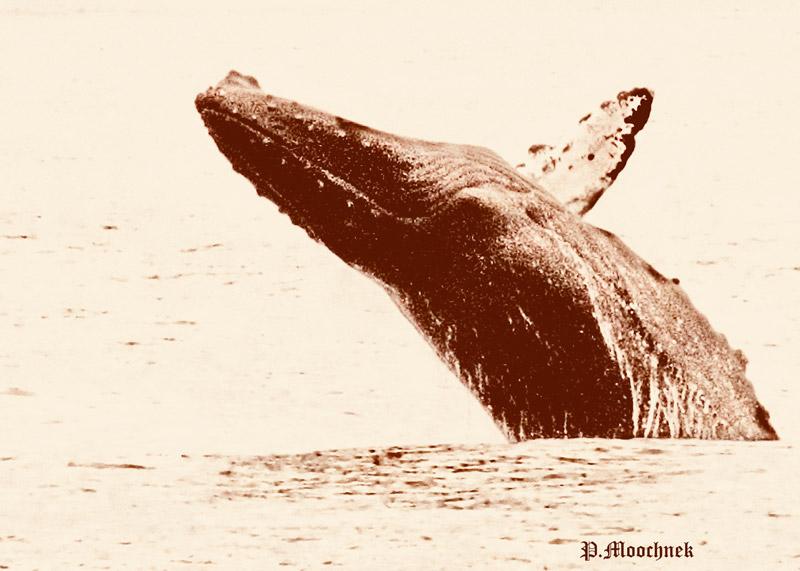 whalewoldDSC1682.jpg