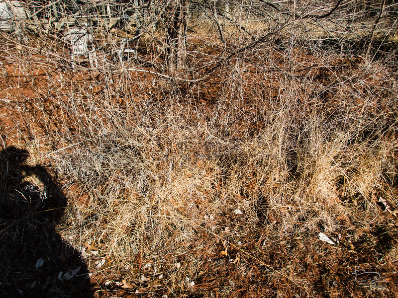 winter under the bald cypress