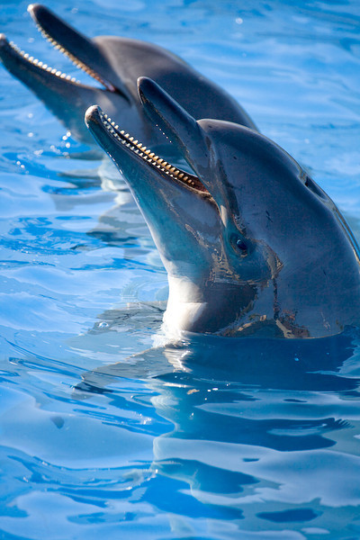 Dolphinaris Cancun 7.jpg