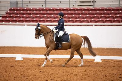 Horse 138