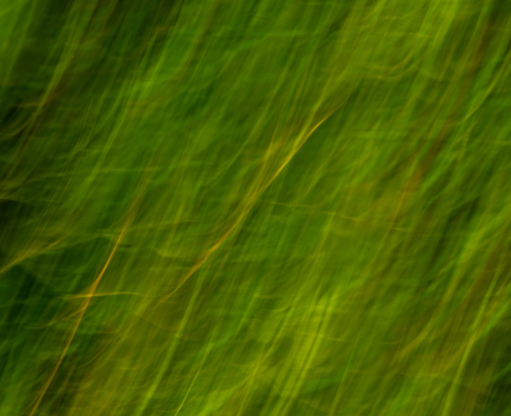 Abstract natural designs with reoccurring leaf and grass and plant themes
