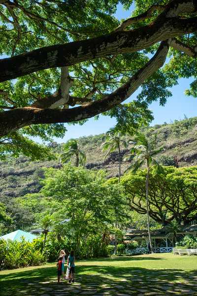 Hawaii2019-624.jpg