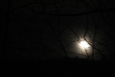 Moon Behind Tree, Dutch Hill, Tamaqua (2-22-2014)