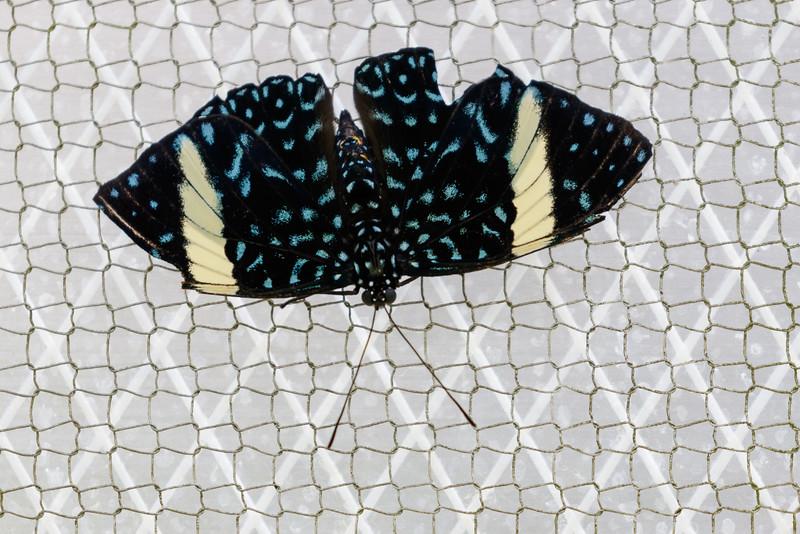 Butterfly World-7601.jpg