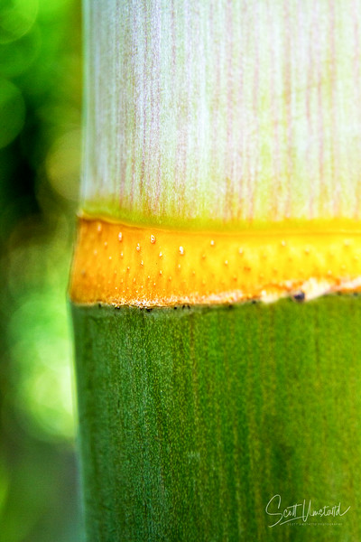 picturePOWER Stock Photo Tropical Plants-056-Edit.jpg
