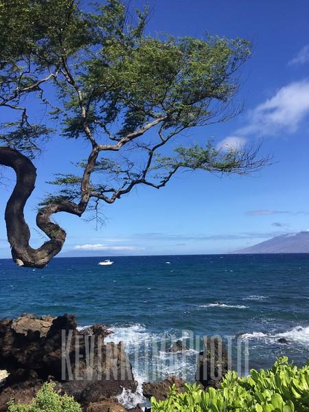 HawaiiPhonePics-370.JPG