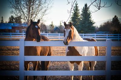 Michelles horses