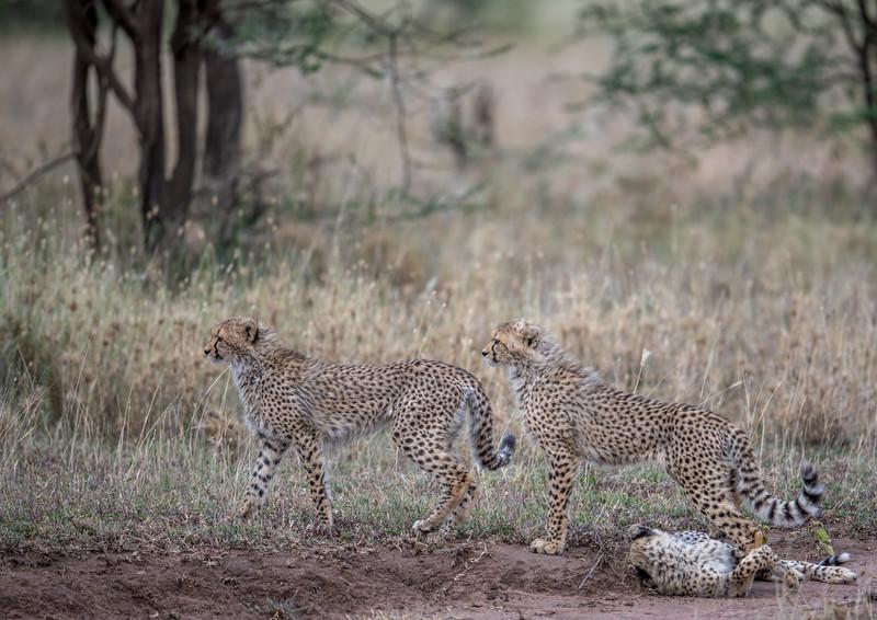 Tanzania_Feb_2018-1180.jpg