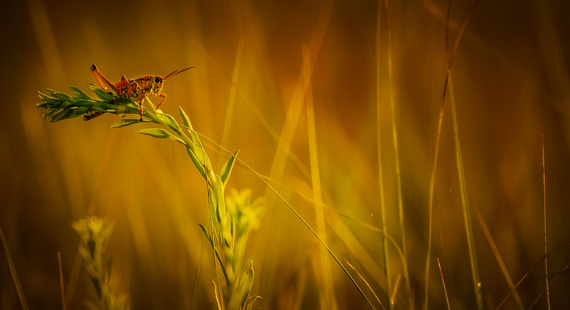 Grasshoppers 36.jpg