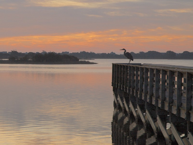 Heron greets the morning on Morris Landing fishing pier.