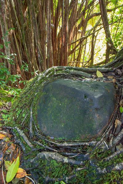 20171215_hawaii_0154.jpg