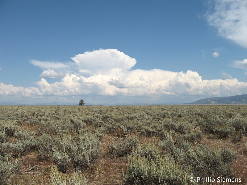 Thunderheads building over the prarie