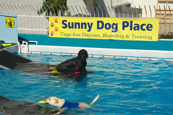 Pool - 1 Nov 2010
