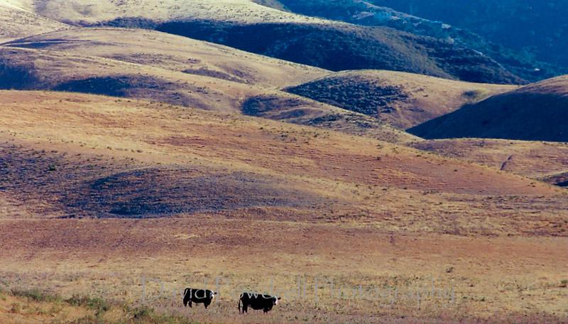 Bixby hills.jpg