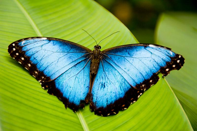 Costa Rica_Butterflies-6.jpg