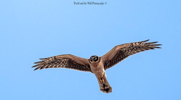 Bird Watchlist