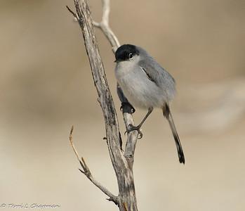 Birds of Spring 2012