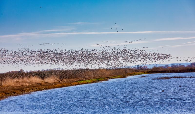 Sacramento winter wildlife viewing