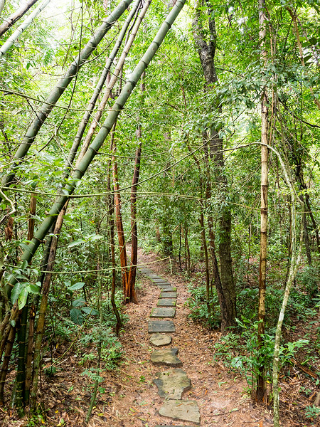 wood temple path.jpg