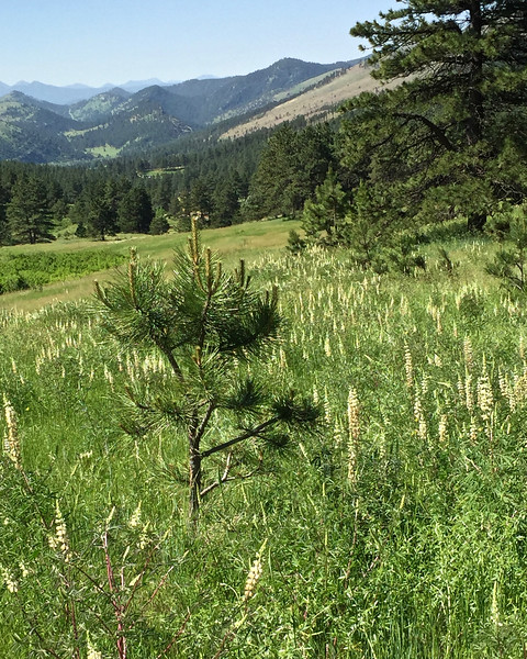 Heil Valley Ranch June 16, 2016 - 7 of 16.jpg