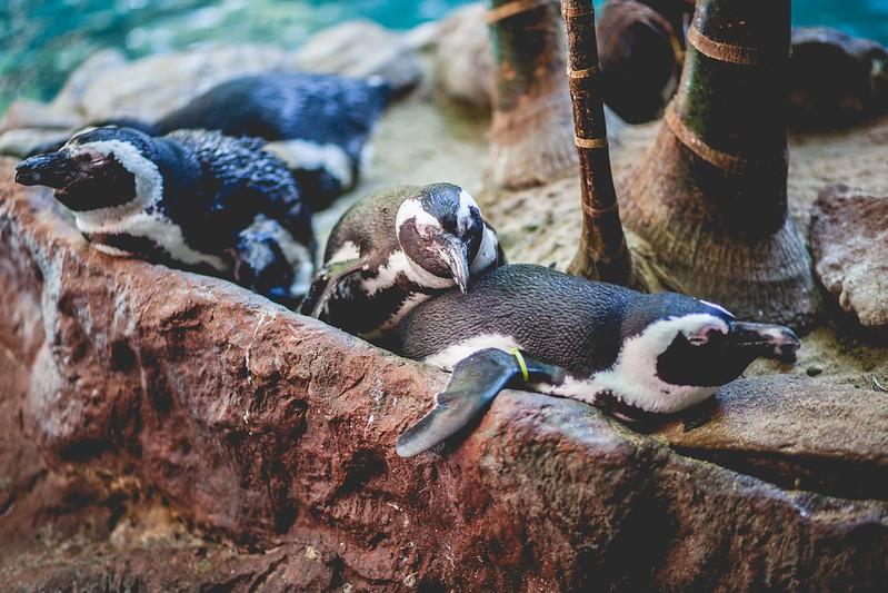 2014 10 25 Dallas World Aquarium-71.jpg