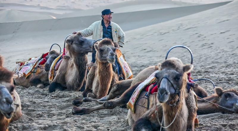 CAMEL CHINA-2.jpg