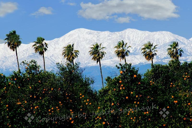 Redlands Mountain Vista ~