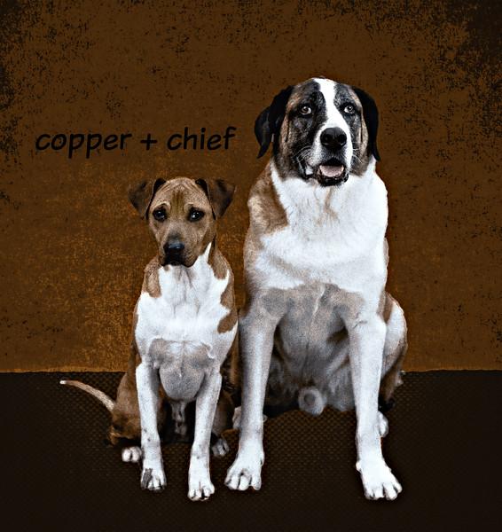 chiefcopper2DSC_0052.jpg