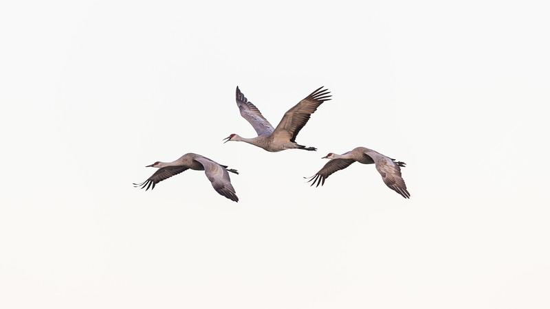 Crane18-5364.jpg