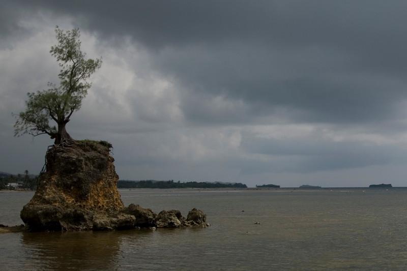 Limestone Island and Tree - Guam
