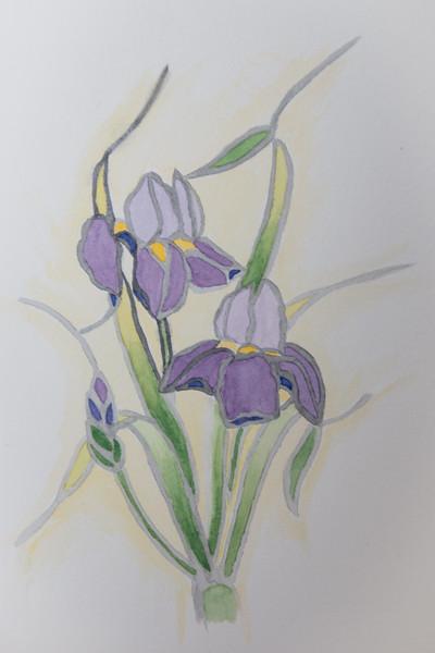 1321-Iris-©Yvonne Carter.jpg