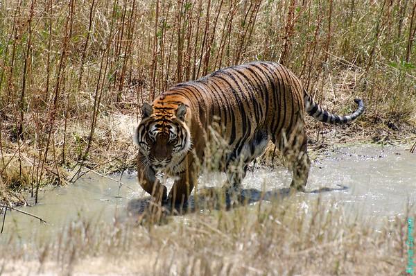 Wild Animal Sanctuary