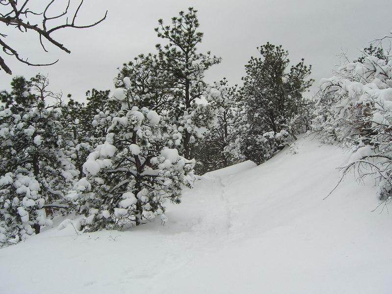 Looks like a trail?