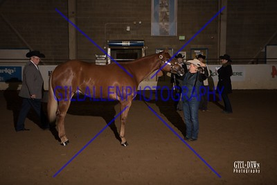 Yearling Satllions Open