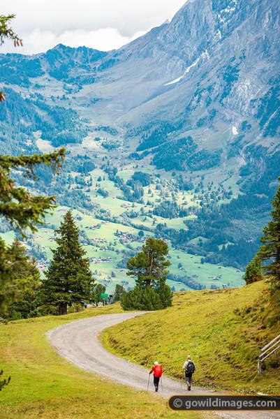 Alpiglen Trail