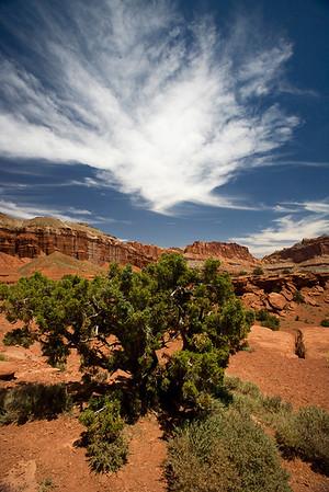 Petrified Forest/Escalante Utah