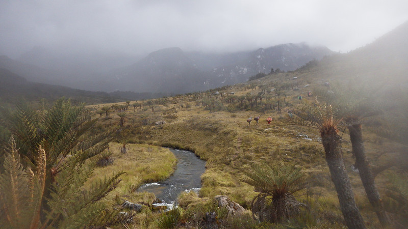 Papua savanna (above 11,500ft or 3.500m) – typical scenery.