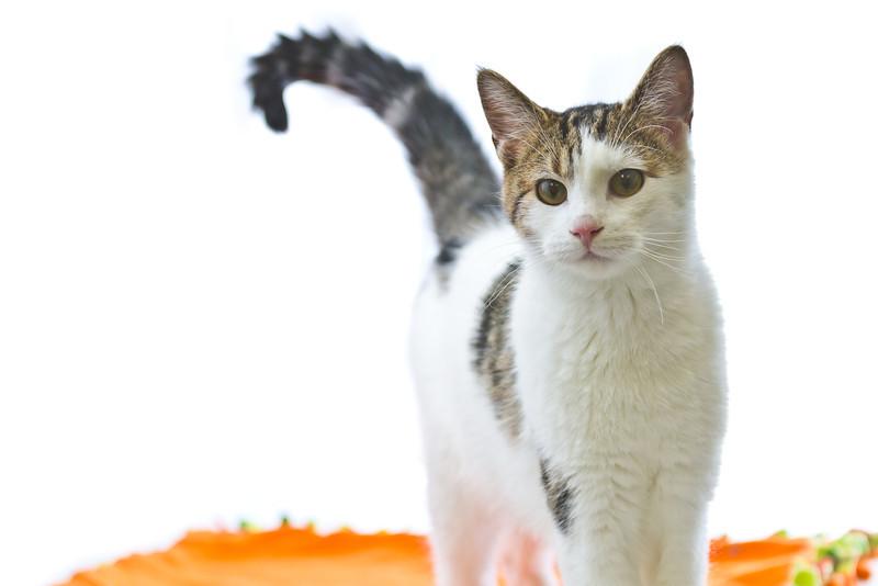 1202_Cats_205.jpg