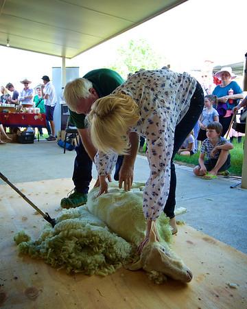 Shearing For Sarcoma~2015-10-10~5425